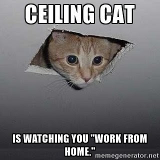 Cat with its head coming out of ceiling